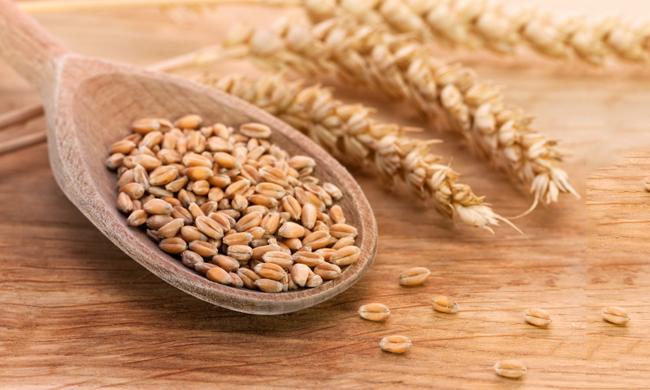 Risultati immagini per chicchi di grano